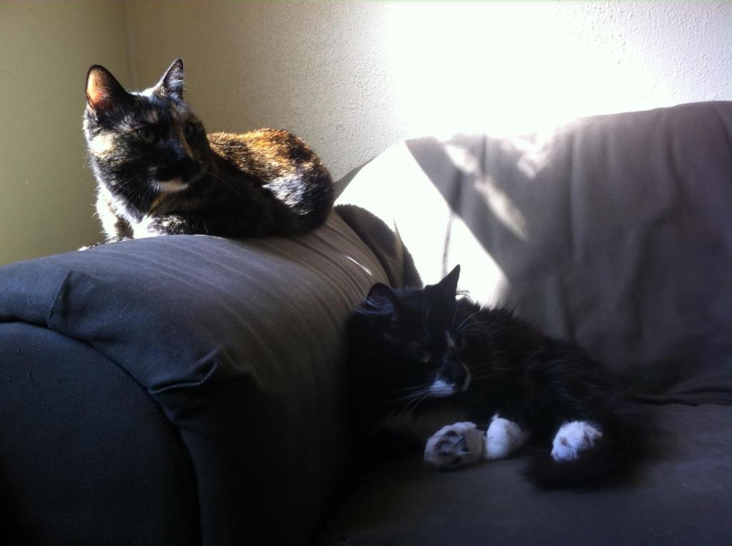 two cats sitting on the sofa